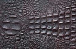 Dunkelbraunes Krokodil-Leder Stockbilder