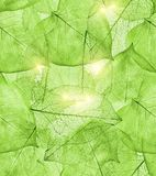 Dunkelgrüner Blathintergrund Stockfoto