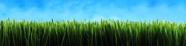 Dunkelgrüner Graspanoramahintergrund Stockbilder