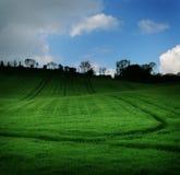 Dunkelgrünes Feld Stockfotografie