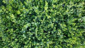 Dunkelgrünes Gras, schöne Natur, die Zahl von oben stockfoto