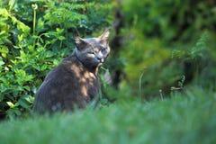 Dunkelgraue Katze Lizenzfreies Stockbild