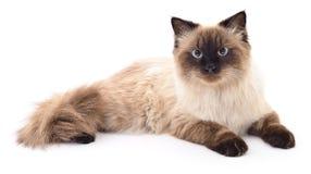 Dunkelgraue Katze lizenzfreie stockfotos