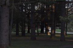 Dunkelheit bei Sonnenuntergang lizenzfreie stockfotografie