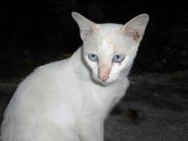 Dunkelheit farbiger Katzenhintergrund Stockfotografie