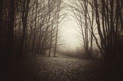 Dunkelheit frequentiertes Holz im Spätherbst Lizenzfreies Stockfoto
