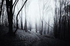 Dunkelheit frequentiertes Holz mit Weg Lizenzfreies Stockfoto
