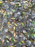 Dunkelheits-Blätter Stockfotografie