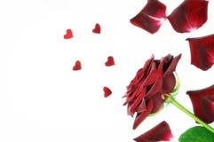 Dunkelrot stieg mit den Blumenblättern und den kleinen Herzformen Lizenzfreie Stockfotos