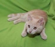 Dunkelrotes Kätzchen der getigerten Katze, das springen wird Stockbilder
