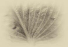 Dunkelt blad Arkivfoton
