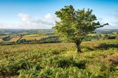 Dunkery-Hügel auf Exmoor Lizenzfreie Stockbilder