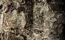 Dunkle alte Baumrinde für Beschaffenheitshintergrund Stockfoto