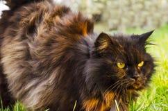 Dunkle aschige graue Katze Lizenzfreie Stockbilder