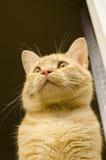 Dunkle aschige graue Katze Stockfotografie