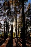 Dunkle Bäume in der Hintergrundbeleuchtung Lizenzfreie Stockfotos