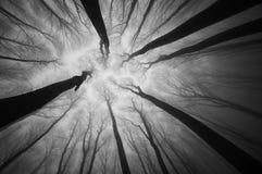 Dunkle Bäume, die oben in einem gespenstischen Wald mit Nebel auf Halloween erreichen Lizenzfreie Stockfotografie