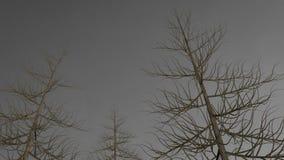 Dunkle Bäume ohne Blätter vor grauem Himmel Stockbild