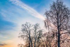 Dunkle Baumschattenbilder auf Hintergrund des blauen Himmels mit rosa Sonnenuntergang, Winterlandschaft Lizenzfreie Stockfotografie