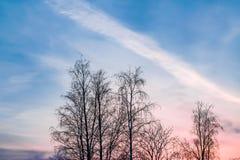 Dunkle Baumschattenbilder auf Hintergrund des blauen Himmels mit rosa Sonnenuntergang, Winterlandschaft Lizenzfreies Stockbild