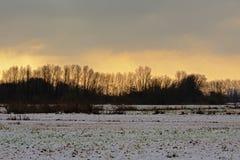 Dunkle Baumschattenbilder gegen gelben Abendhimmel mit Schneefeld in der Front Stockbilder
