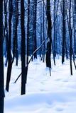 Dunkle Eichen im kalten Winterwald Lizenzfreie Stockfotografie