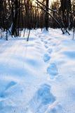 Dunkle Eichen im kalten Winterwald Stockbild