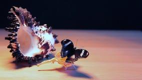 Dunkle Gesamtl?nge hd Hintergrund der Seeoberteil-Schmetterlingstabelle stock video footage