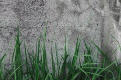 Dunkle Grey Coarse Concrete Stone Wall-Beschaffenheit, grünes Gras, horizontale Makronahaufnahme-altes gealtertes verwittertes au Stockfotografie