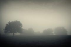 Dunkle Landschaft mit Nebel und Bäumen Stockbilder