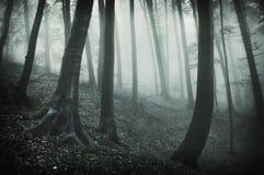 Dunkle Landschaft von einem Wald mit schwarzen Bäumen und Lizenzfreie Stockfotografie