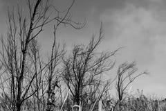 Dunkle Niederlassung im Halloween-Hintergrundkonzept lizenzfreie stockfotografie