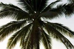 Dunkle Schattenbilder von Kokosnussbäumen mit Himmel und Sonnenuntergang Lizenzfreies Stockbild