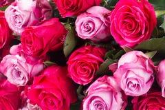 Dunkle und hellrosa Rosen auf Tabelle Lizenzfreies Stockbild