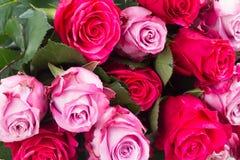 Dunkle und hellrosa Rosen auf Tabelle Stockfotos