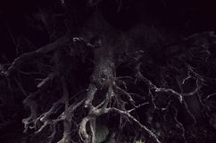 Dunkle verdrehte Wurzeln im furchtsamen Wald stockbilder