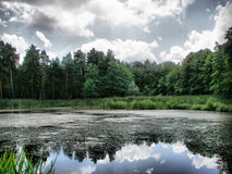 Dunkle Waldlandschaft Stockbild