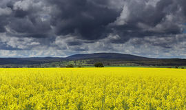 Dunkle Wolken über Canolafeldern Stockfotografie
