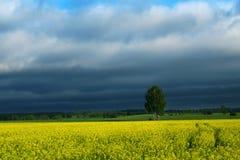 Dunkle Wolken über Rapsfeld 2 Lizenzfreie Stockbilder