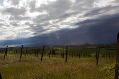 Dunkle Wolken über Weinberg Lizenzfreie Stockfotografie