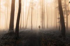 Dunkle Zahl im nebeligen Wald Lizenzfreie Stockfotografie