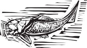 Dunkleosteus Fossil Fish. Woodcut style image of a Dunkleosteus an armored ancient fossil fish royalty free illustration