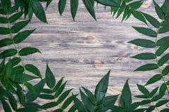 Dunkler alter hölzerner Hintergrund mit den schönen Grünblättern vereinbart Stockbild