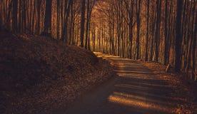 Dunkler Autumn Forest Road Lizenzfreie Stockfotografie