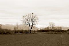 Bäume am düsteren Wintertag Stockfoto