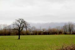 Baum auf dem Landschaftsgebiet Lizenzfreie Stockbilder