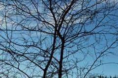 Dunkler Baum Stockfotografie
