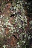 Dunkler Baum-Stamm mit silberner farbiger Flechte auf seiner Oberfl?che stockbild