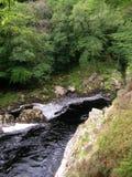 Dunkler bernsteinfarbiger Wasser Findhorn-Fluss an Randolphs-Sprung, Morayshire, Schottland, Großbritannien Stockfotografie