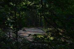 Dunkler Forest Path nachts Stockfoto